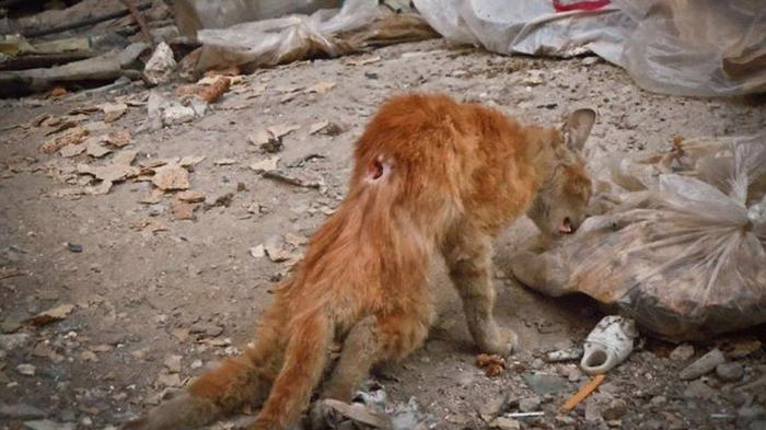 the war ravaged cats of syria hero